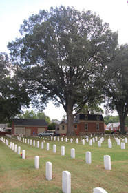 Oak tree at the Seven Pines National Cemetery.